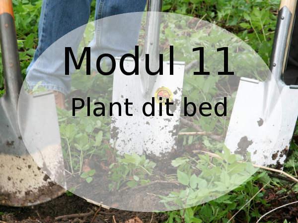 sådan planter du et staudebed