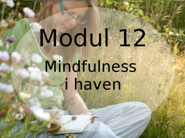 find din indre ro i haven med mindfulness og haveterapi