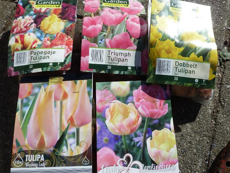 gule-og-lyseroede-tulipaner
